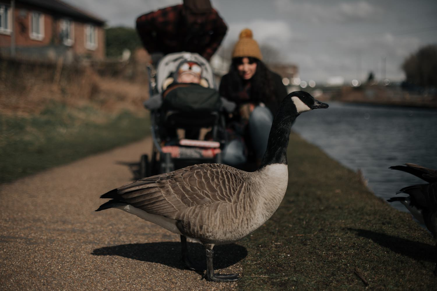 A goose and a family close to the canal in Stretford